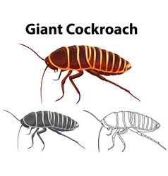 doodle animal for giant cockroach vector image