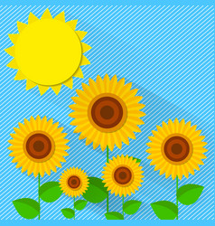 flat style sunflower vector image