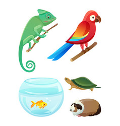 friendly pets of exotic species and breeds set vector image