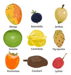 Set different fruits vector