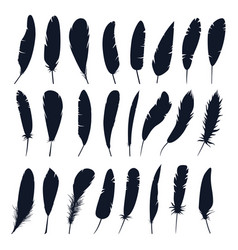set isolated feather silhouette birdplumage vector image