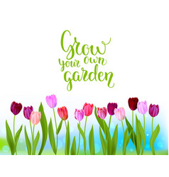 Tulip spring banner vector