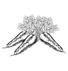 Vintage retro woodcut carrots vector
