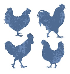 Chicken Silhouette Grunge vector image vector image