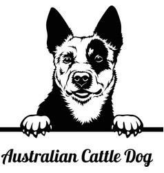 australian cattle dog - peeking dogs - breed face vector image