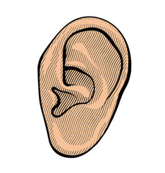 human ear in retro vector image