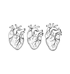 dotwork three human hearts vector image
