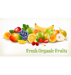 Fresh Organic Fruits And Berries Isolated On White vector image