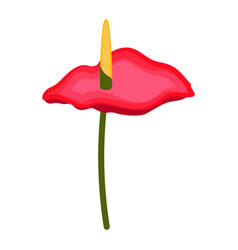 Isolated anthurium flower vector