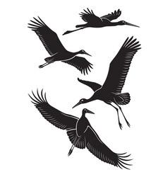 stork vector image