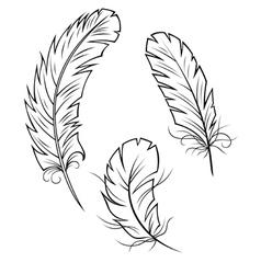 Bird Feathers Set vector image vector image