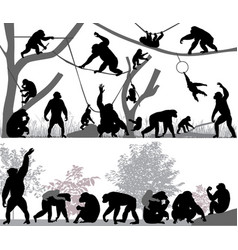 family of chimpanzee vector image