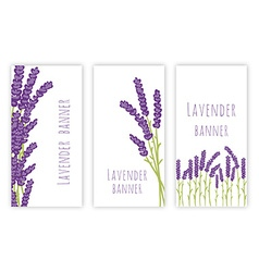 Set of three lavender banners vector image vector image