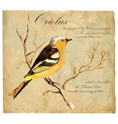Hand painted bird oriolus vector