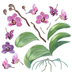 Set of isolated watercolor orchids for your design vector