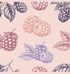 raspberry blackberry seamless pettern vector image