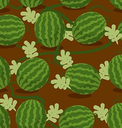 Water-melon plantation seamless pattern fruity vector