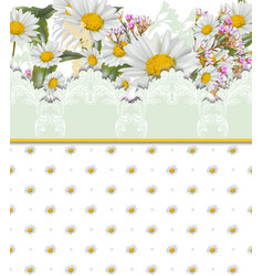 Chamomile flowers card retro style lace and vector