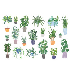 Collection of decorative houseplants isolated on vector