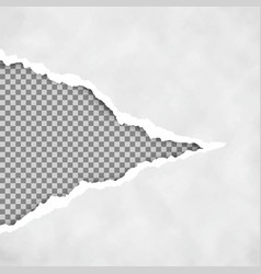 Gray ripped open paper with transparent vector