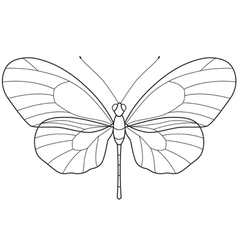 Outline Butterfly vector