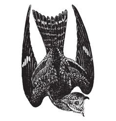 Small night hawk vintage vector