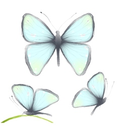 three hand drawn delicate blue butterflies vector image