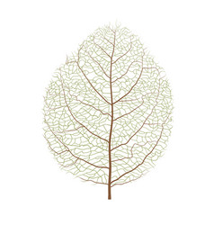 Wood leaf vector