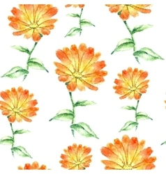 Watercolor calendula herbs seamless pattern vector image