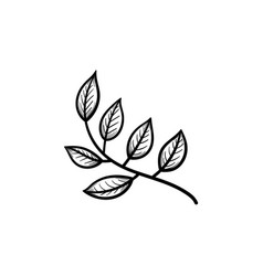 leaves on branch hand drawn sketch icon vector image