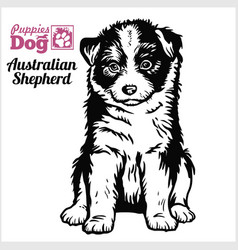 Australian shepherd puppy sitting drawing hand vector