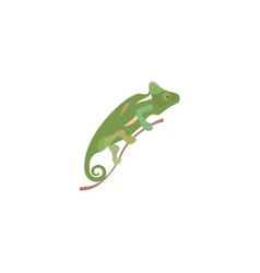 chameleon colorful icon in flat style isolated vector image