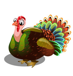 fat gobbler isolated on white background vector image