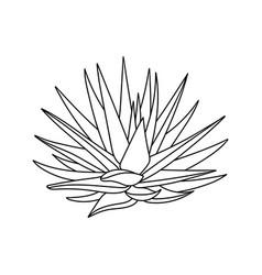 Succulent aloe vera in doodle style vector