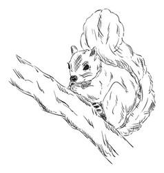 squirrel on a branch vector image