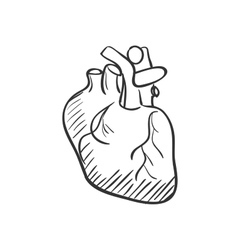 heart doodle drawing vector image