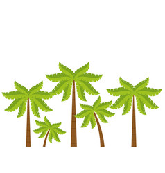 beach tree palms vector image