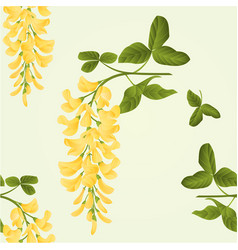 Seamless texture laburnum branch decorative shrub vector