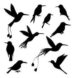 Set hummingbirds silhouettes vector