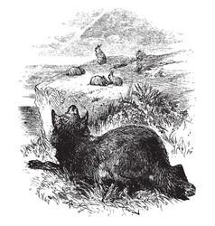 Wolf hunting rabbits vintage vector