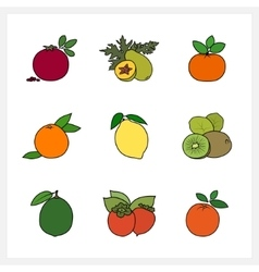Citrus Fruit and Fruit Growing on a Trees vector