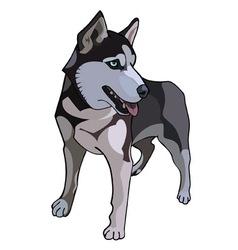 Husky dog painted vector image