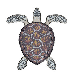 Turtle iconcartoon icon isolated on vector