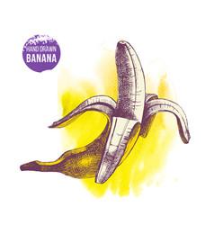 hand drawn banana on watercolor yellow background vector image vector image