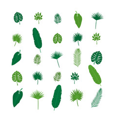 set of tropical leaves nature elements for your vector image vector image