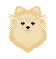 Breed of a dog spitzmuzzle spitz single icon in vector