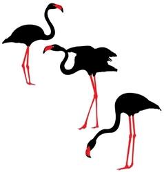 Flamingo Silhouettes vector image