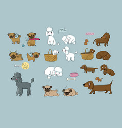 cute cartoon pug poodle and dachshund dogs and vector image