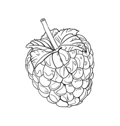 Raspberry in vintage style line art vector