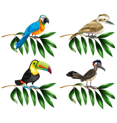 four types of wild birds on branch vector image vector image